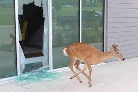 Deer crashes through window into closed Iowa business
